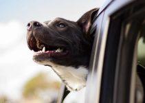 Cachorro no Uber, pode