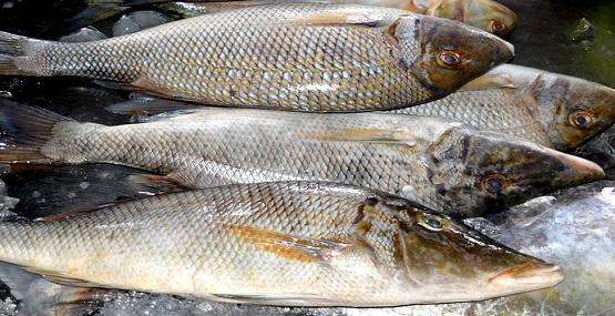 Sonhar Comprando Peixe